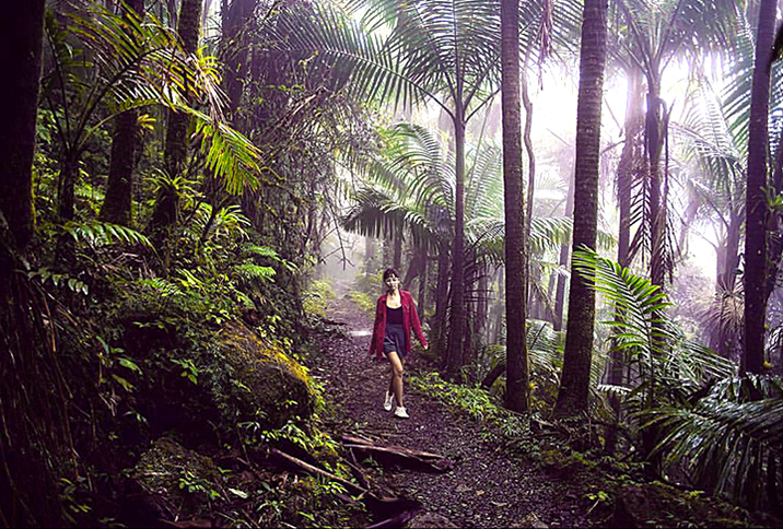 Many trails cross el yunque rainforest