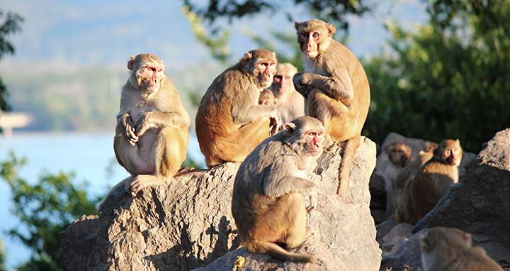 Monkeys on Cayo Santiago as seen from our kayaks