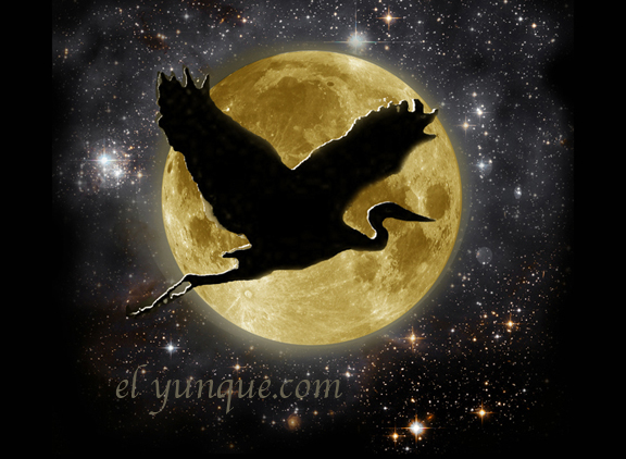 night heron flying over the moon in Puerto Rico