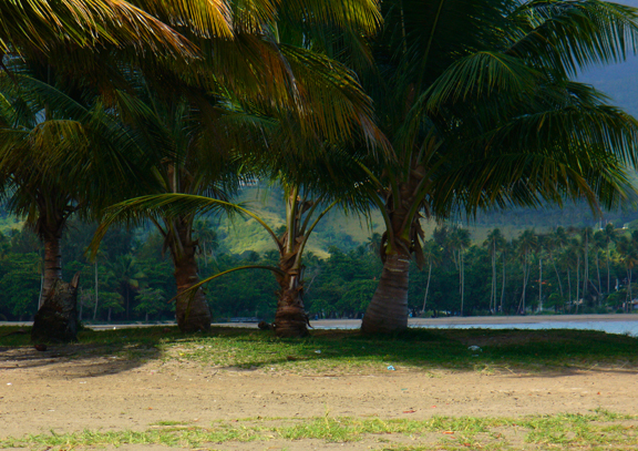 Coconut trees at the point of the Luquillo Balneario beach