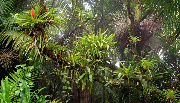 bromeliads in the forest
