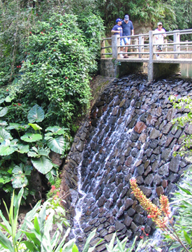 El Yunque rainforest walkway