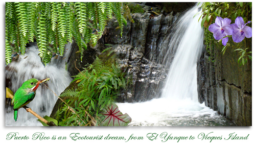 waterfalls at juan diego Puerto Rican tody in el yunque
