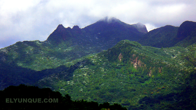 The El Yunque rainforest peaks in Puerto Rico