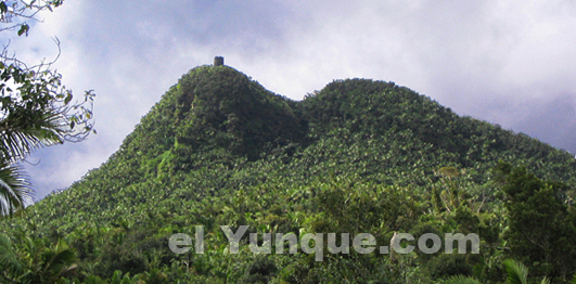 Mt.Britton tower on a peak in the El Yunque rainforest