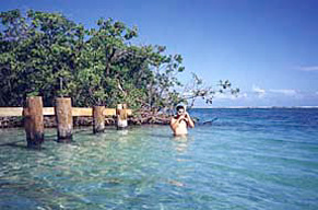 Gilligans Island mangrove key off Guanica Puerto Rico
