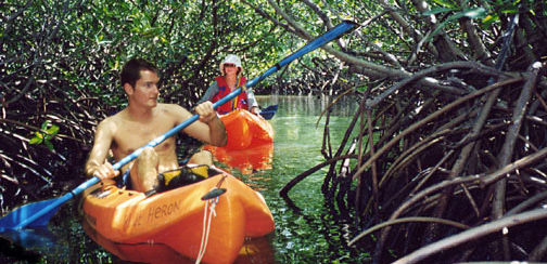 Kayak the mangrove lagoons