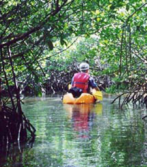 canls through the red mangrove forest and laggons