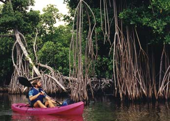 Kayaking in the mangrove canal