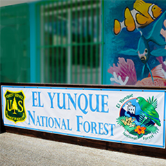 Palmer is the gateway town to el yunque el portalito is the Forest service office and showroom