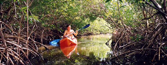 Kayaking the mangrove canals in Vieques
