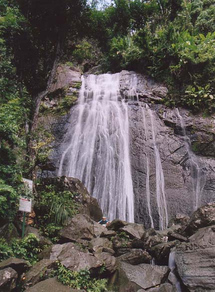 Coco Falls waterfall in the El Yunque rain forest in Puerto Rico