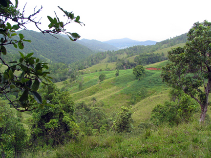 Above Cayey mountain cow pasture